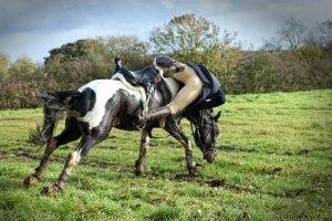 letselschade door paard