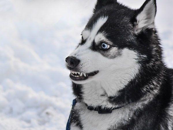 Volg het stappenplan in dit artikel als u bent gebeten door een hond.