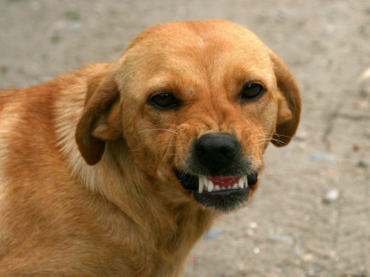 Helaas is een aansprakelijkheidsverzekering voor hondeneigenaren nog niet verplicht.