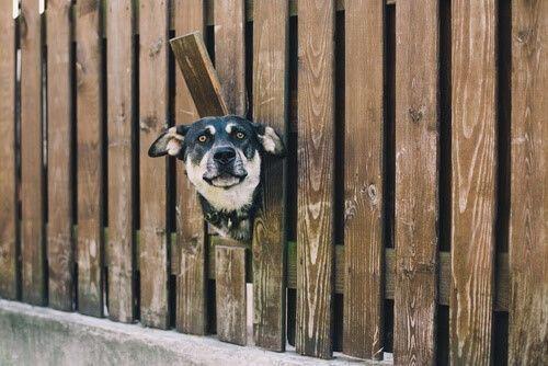 aanrijding hond