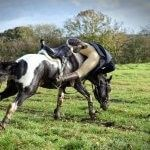 paard en letselschade