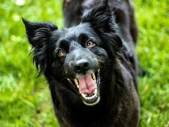 blaffende hond en landelijk bijtprotocol