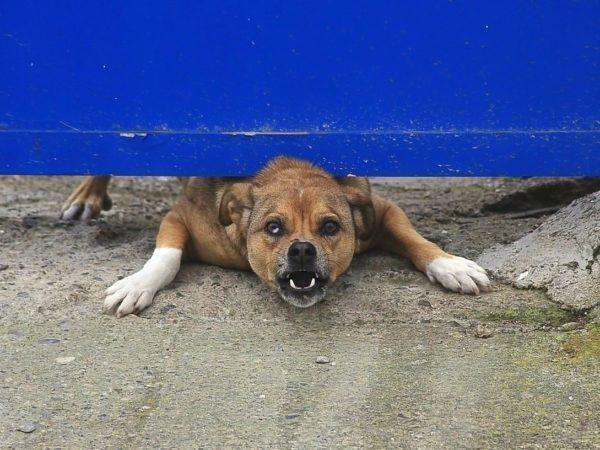 Hoe ontwijkt u een hondenbeet? En als u gebeten bent, wat kunt u dan het beste doen?